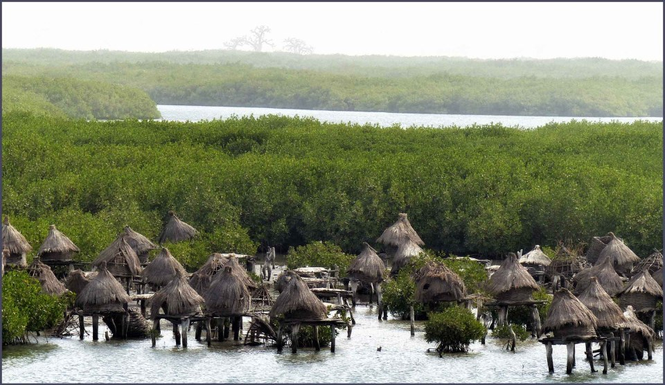 Small thatched buildings on stilts by mangroves