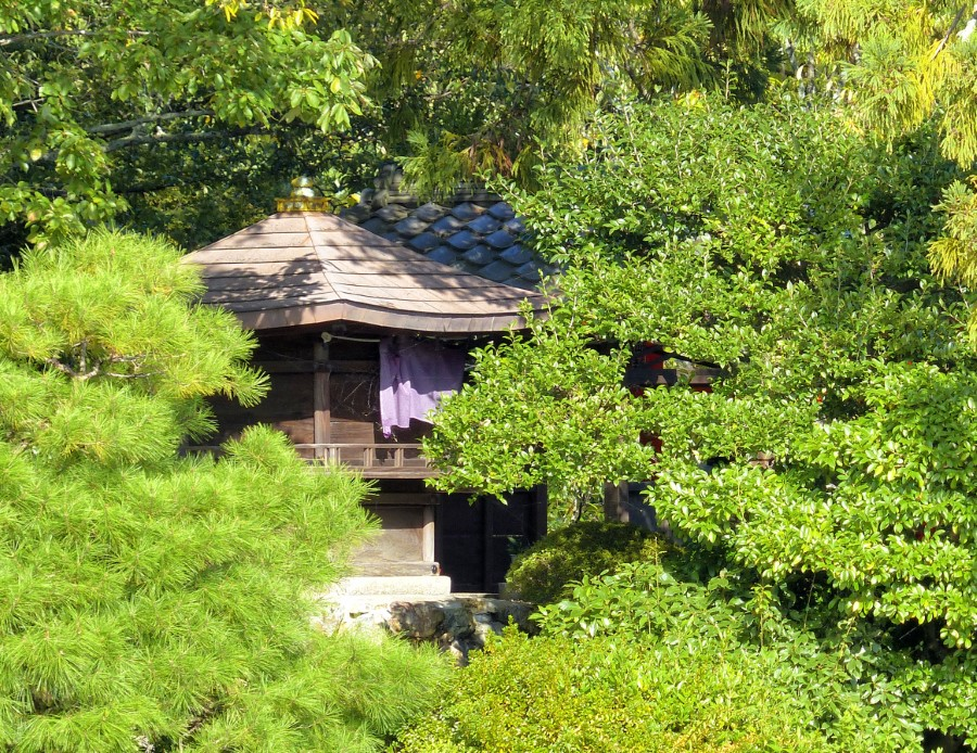 Small wooden building among trees