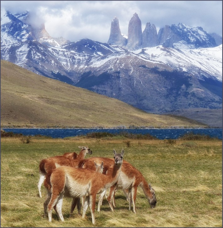 Mountain landscape with grazing animals