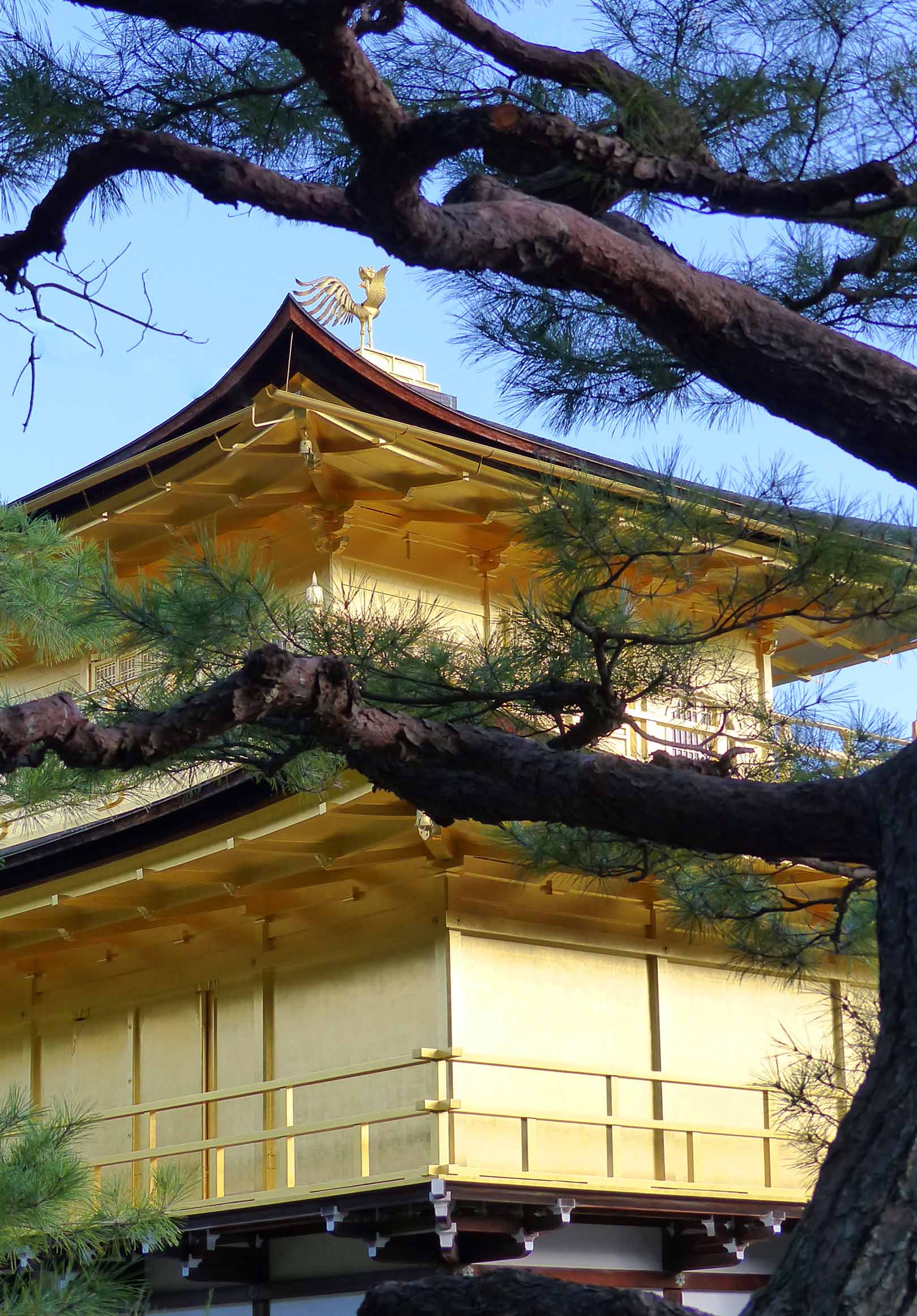 Golden temple and pine tree