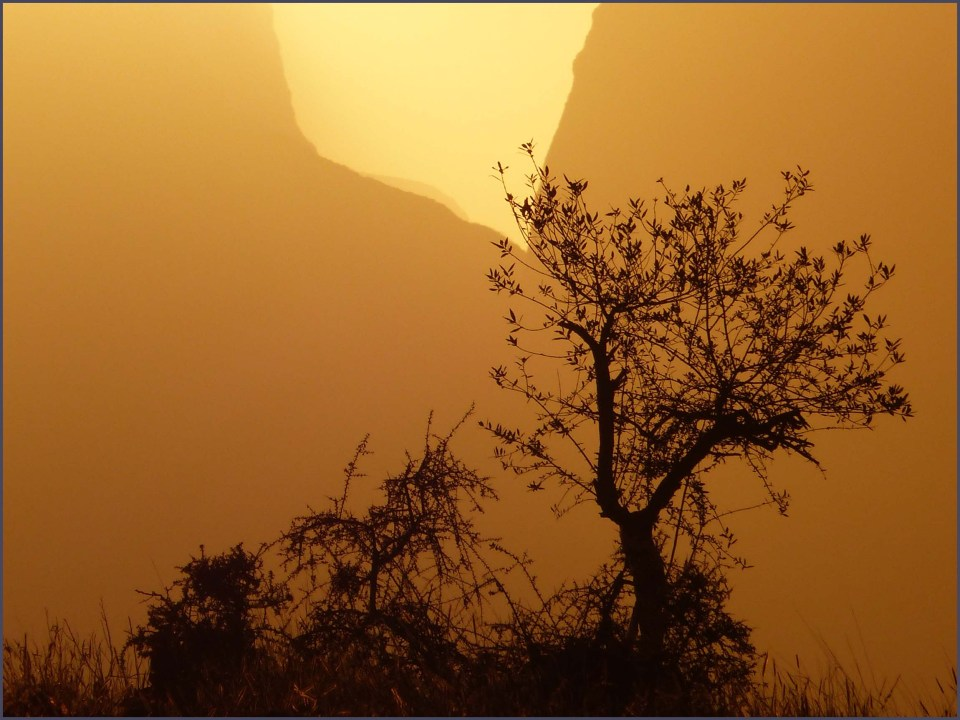 Tree silhouetted against yellow mountains