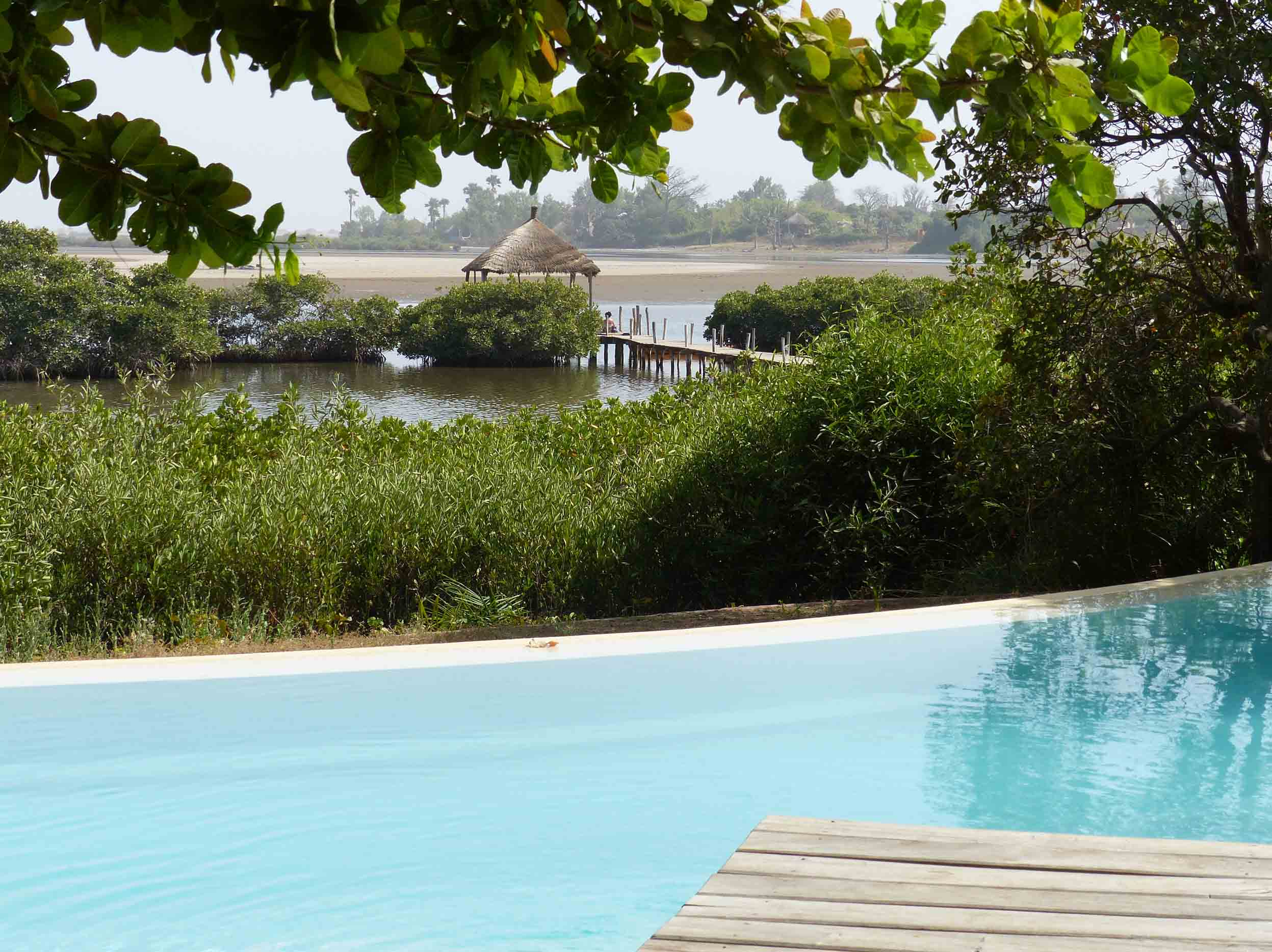 Small swimming pool with mangroves beyond
