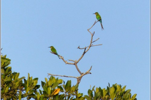 Two bright green birds in a dead tree
