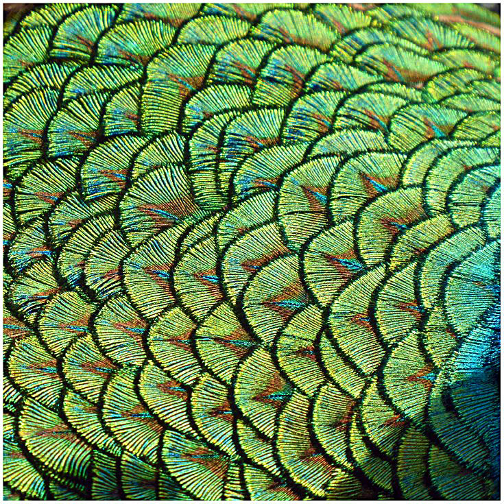 Bright green feathers