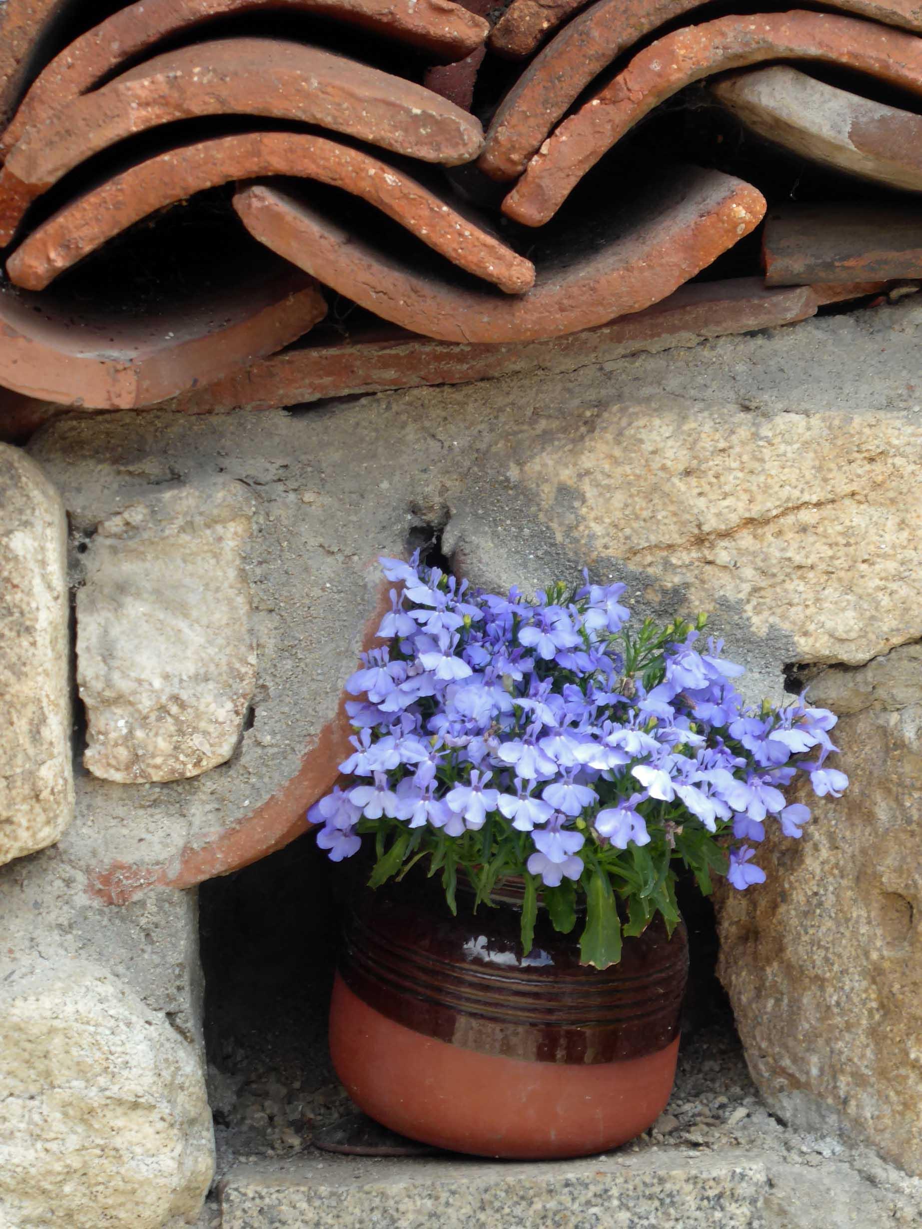 Purple flowers in a pot on a wall