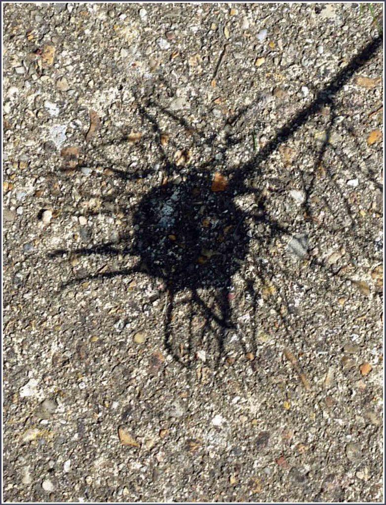 Seed head shadow on stone