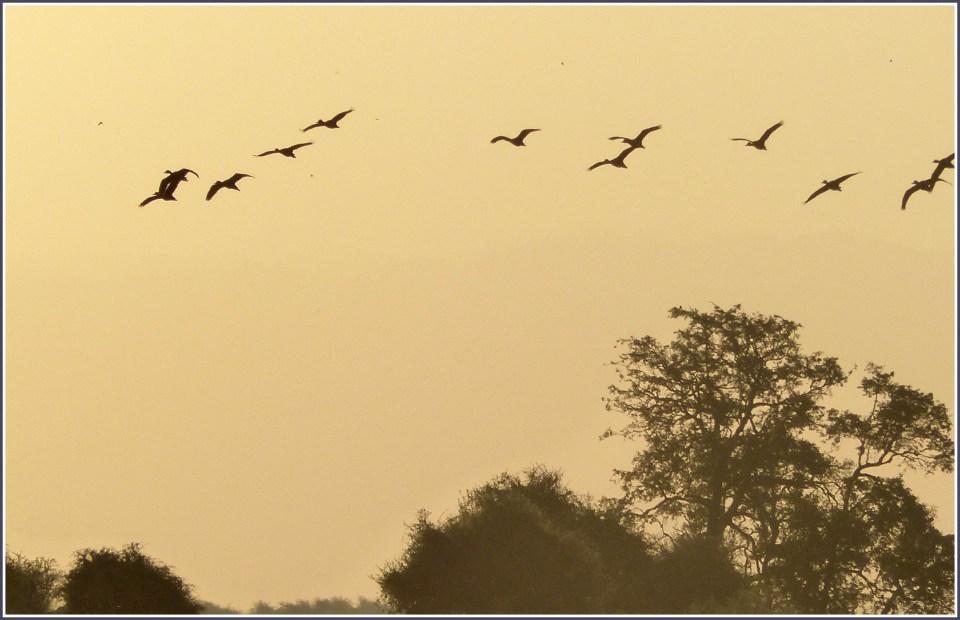 Birds against a yellow sky