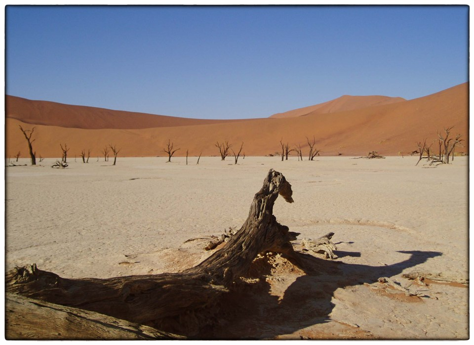 Dead trees among sand dunes