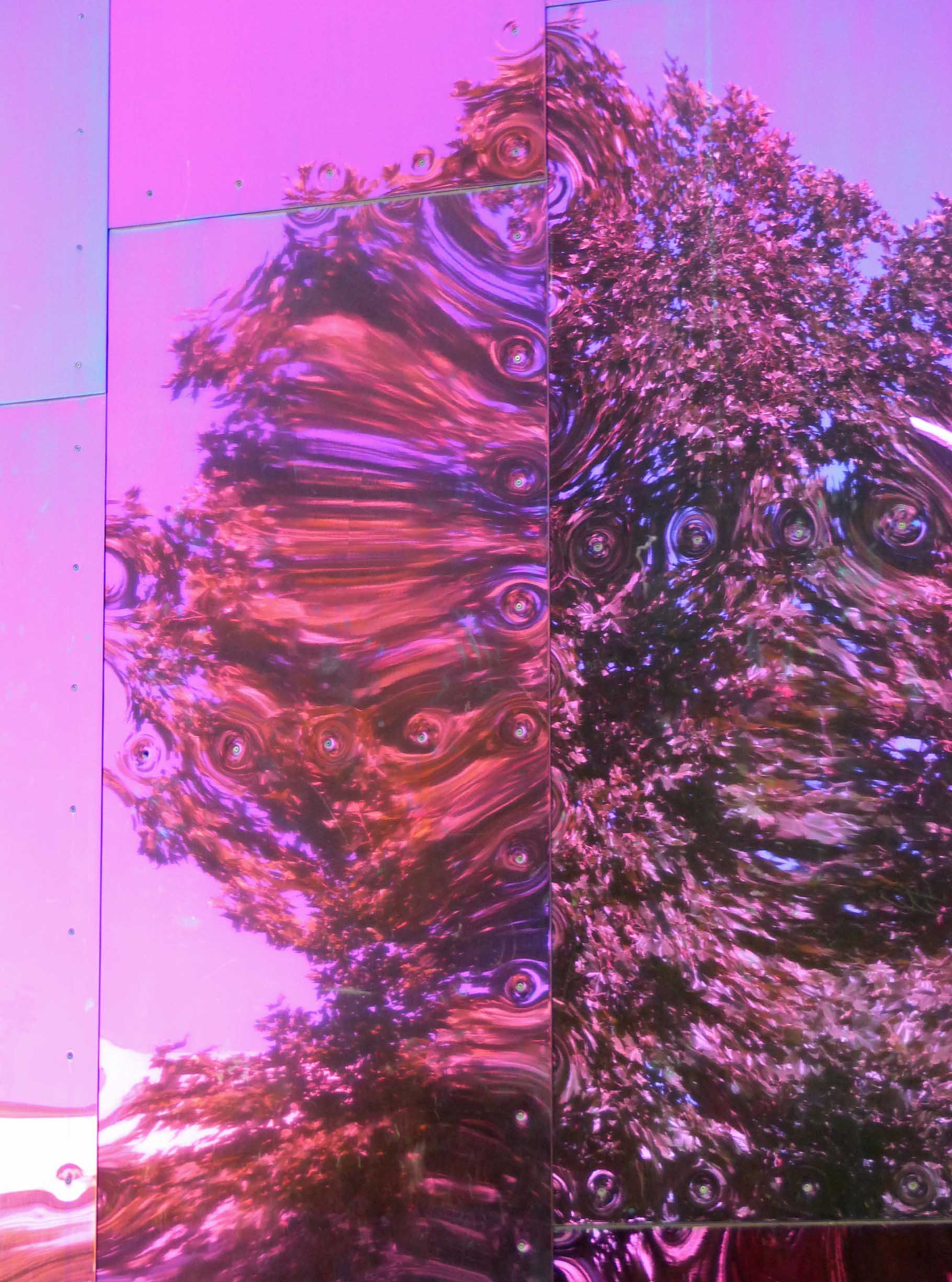 Distorted tree reflection on purple wall