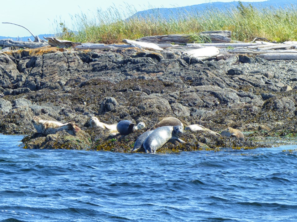 Seals on a rocky foreshore