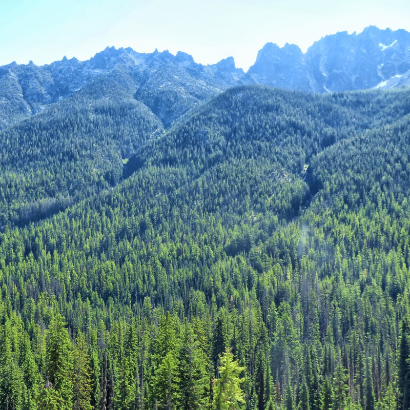 Pine covered hills and mountains
