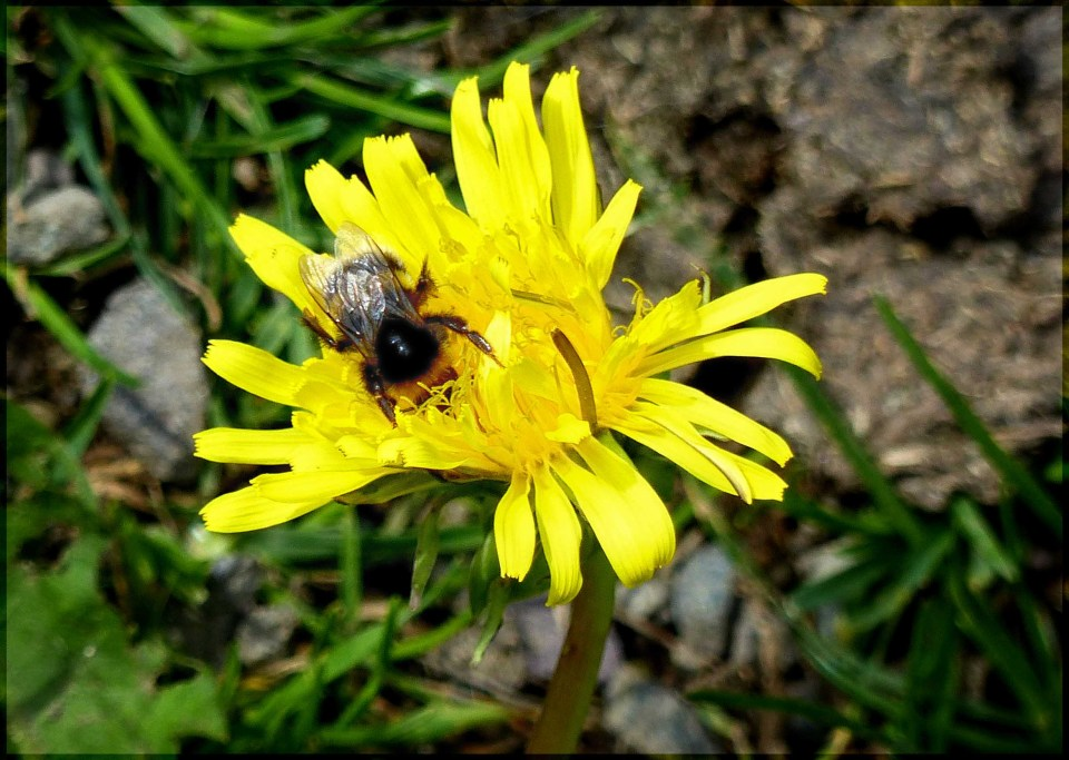 Yellow flower with a bee