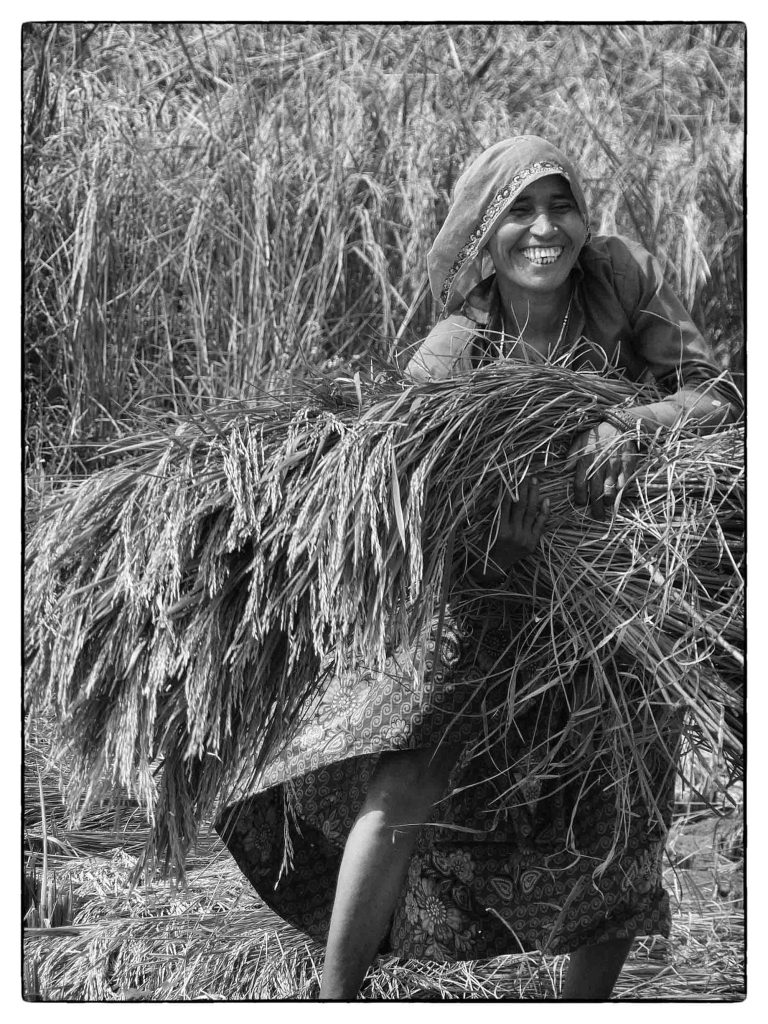Black and white photo of young girl harvesting grain