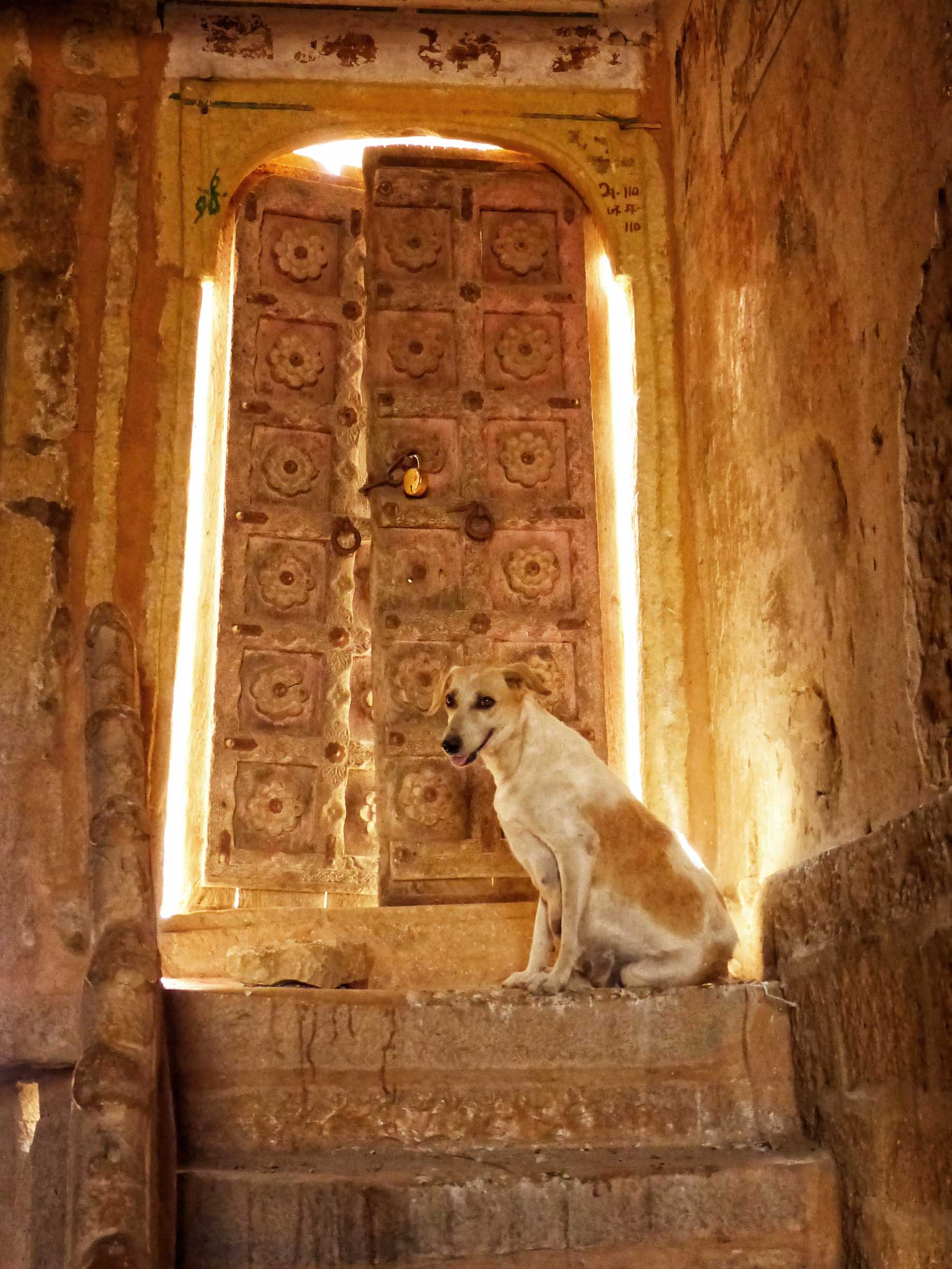 Dog in front of partly closed carved door
