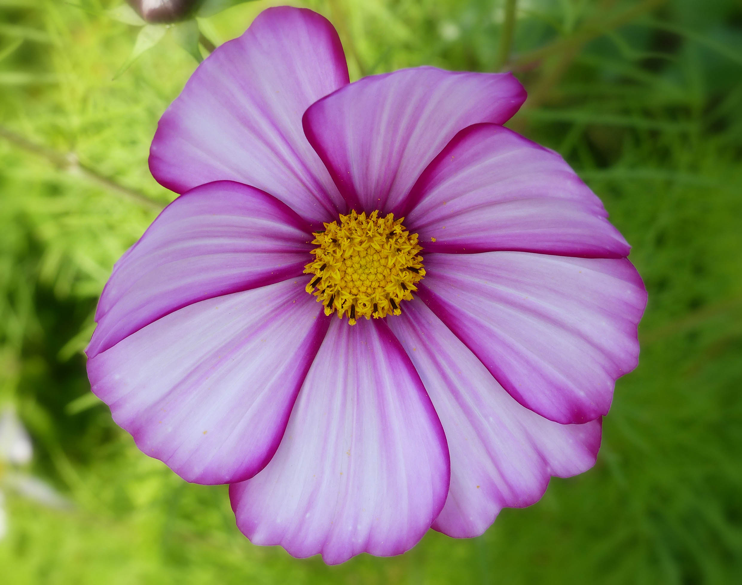 Purple flower with yellow centre
