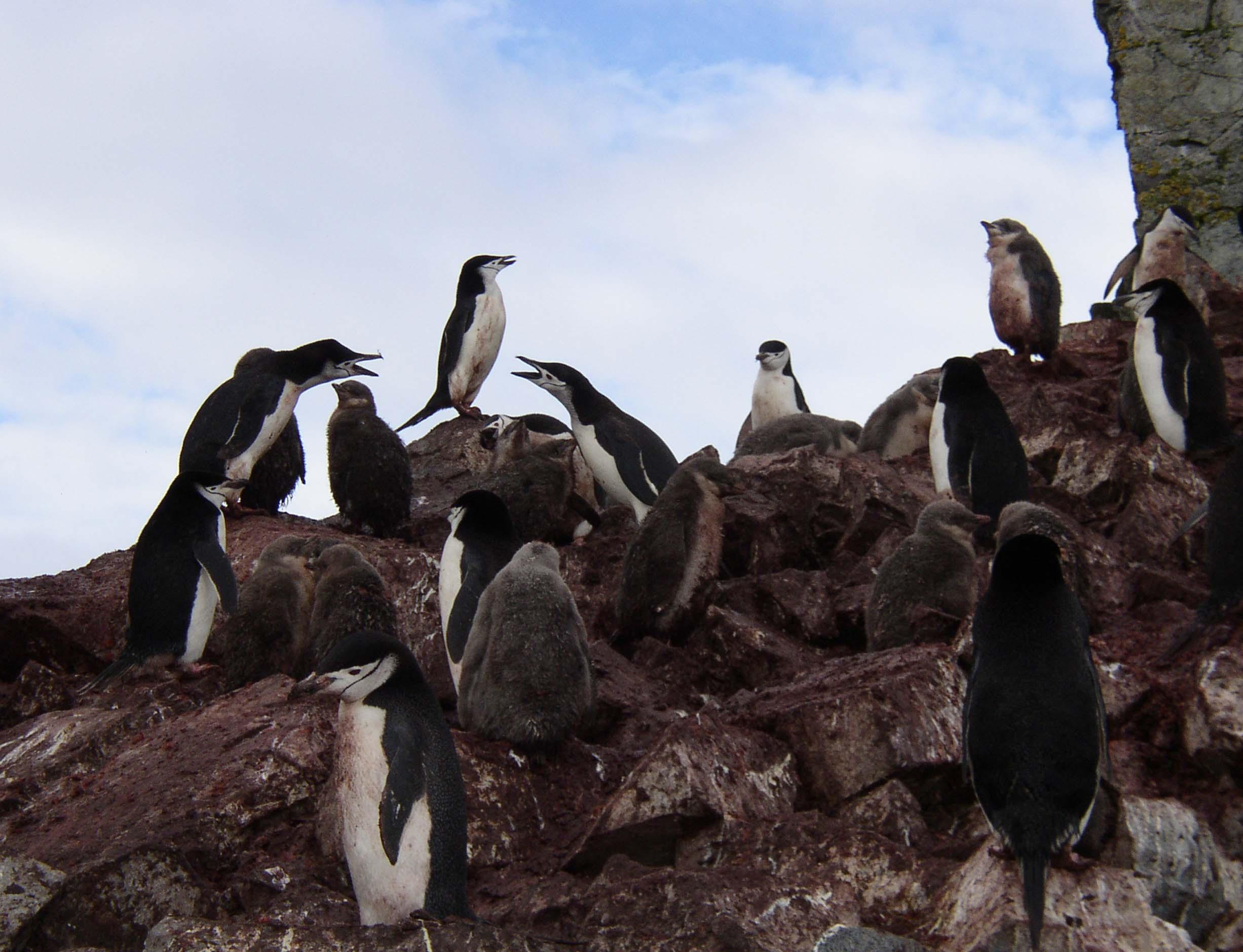 Group of penguins on rocks