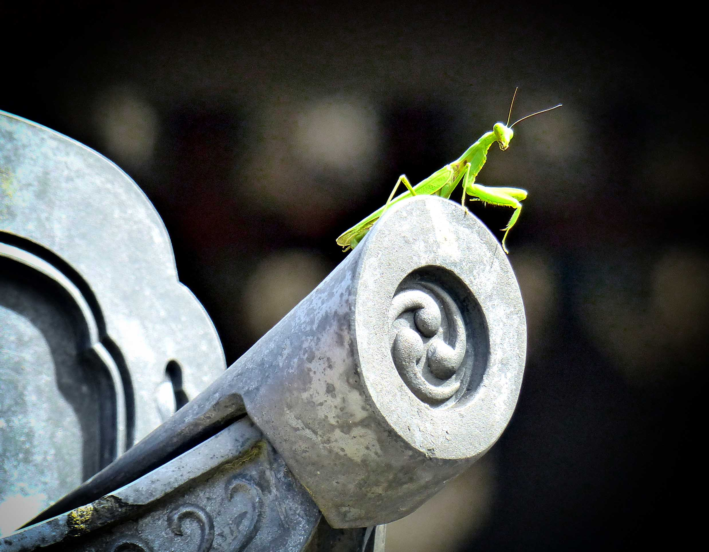 Green mantis on a carved grey roof