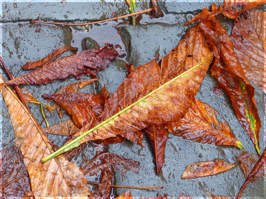 Autumn leaves on wet pavement