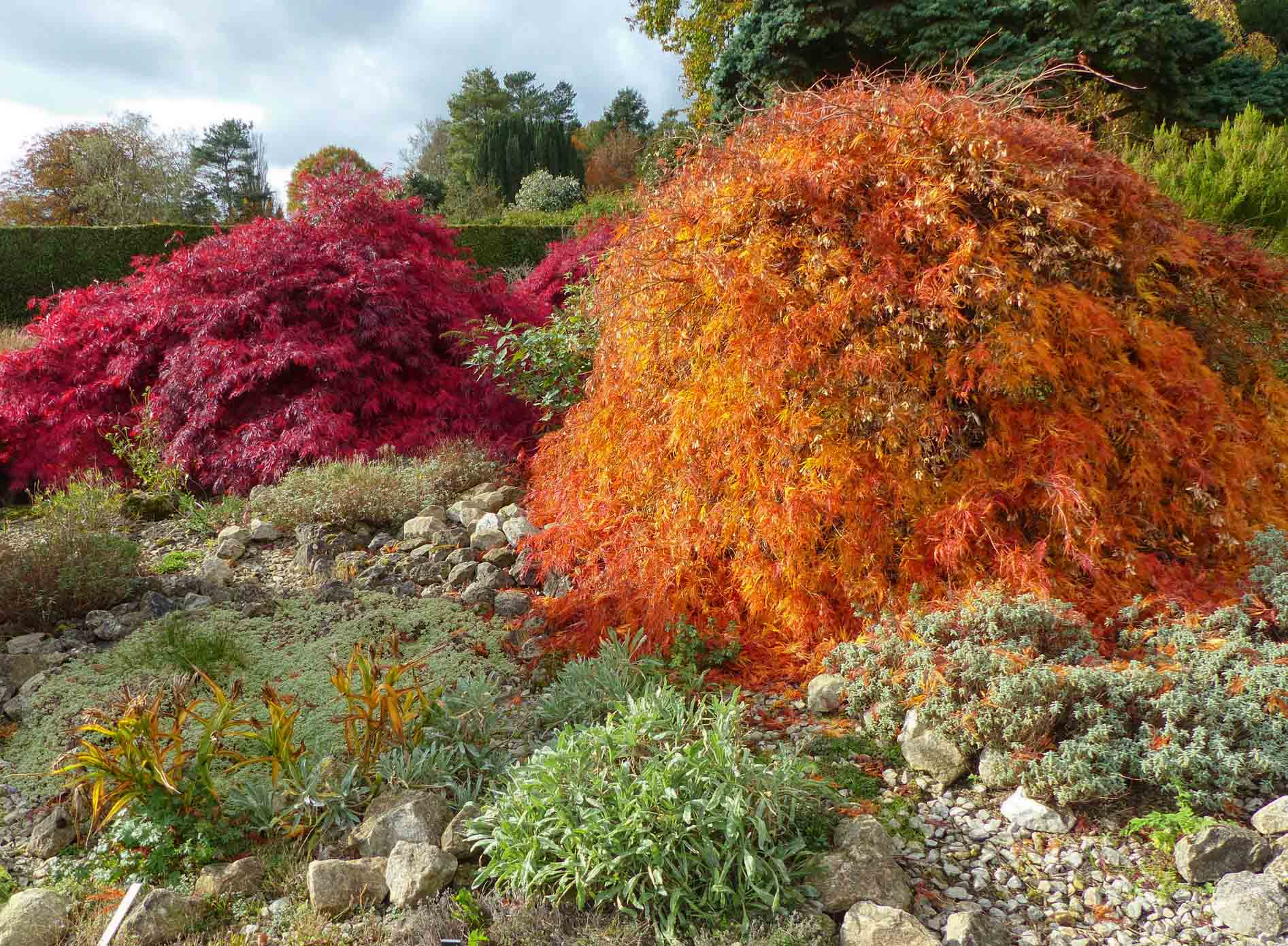 Group of different coloured trees