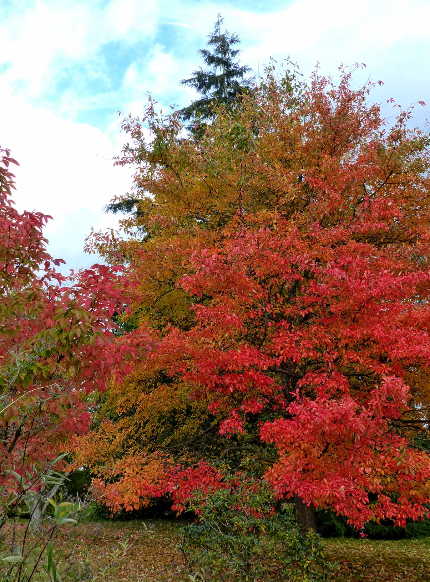 Trees with autumn colours