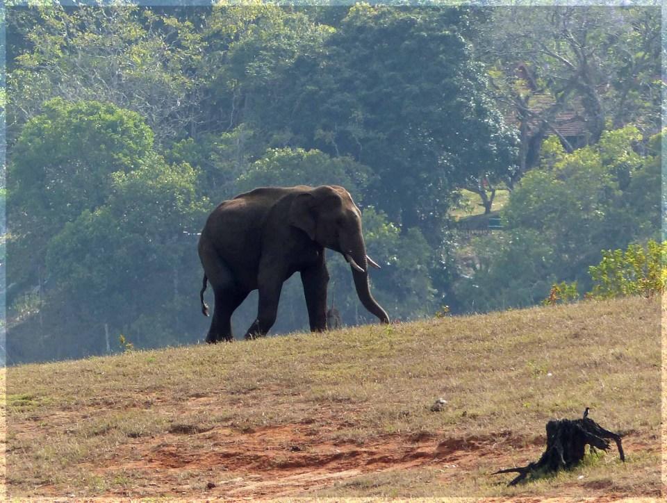 Elephant on hillside