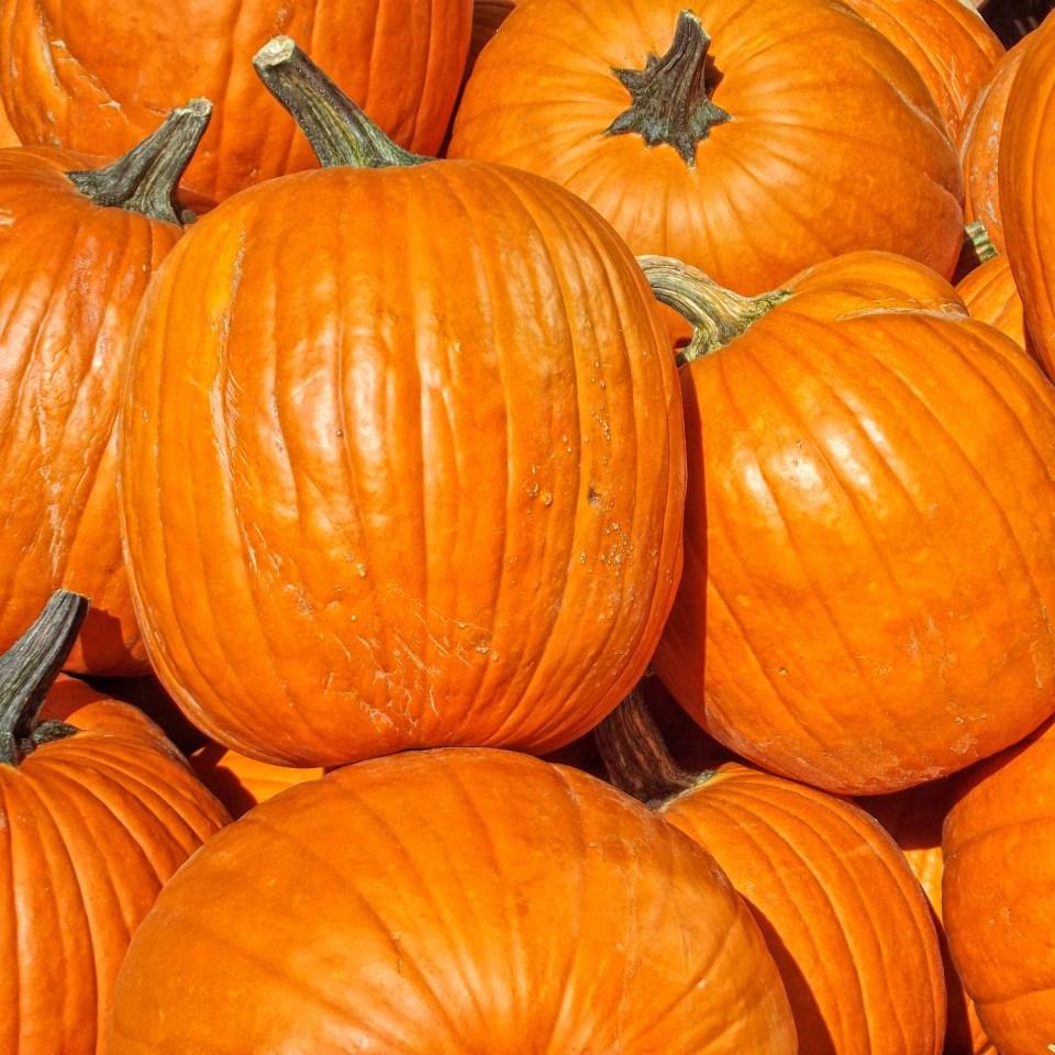 Close-up of bright orange pumpkins