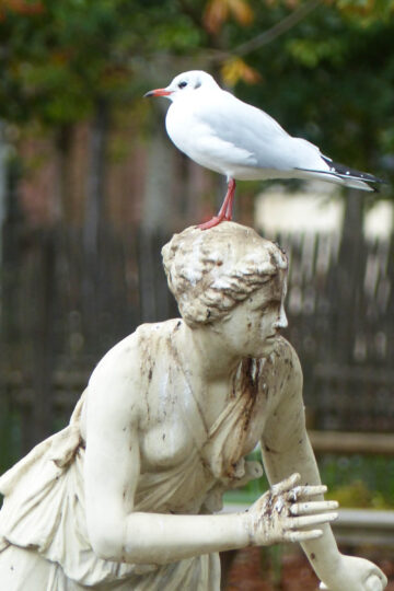 Statue of girl with seagull on her head