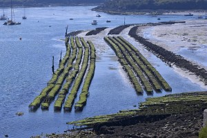 Oyster Haven: A view of the coast near Plouhinec (Photo - Bernard Beigne)