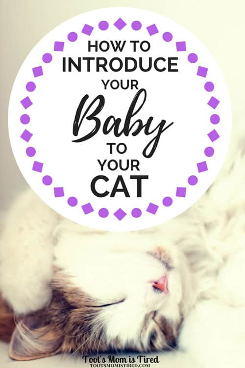 How to Introduce Your Baby to Your Cat