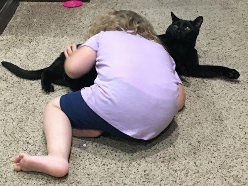 toddler giving a cat a hug.
