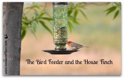 The Bird Feeder and the House Finch   Toot Sweet 4 Two The Bird Feeder and the House Finch cover