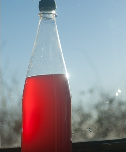 Homemade Currant Champagne