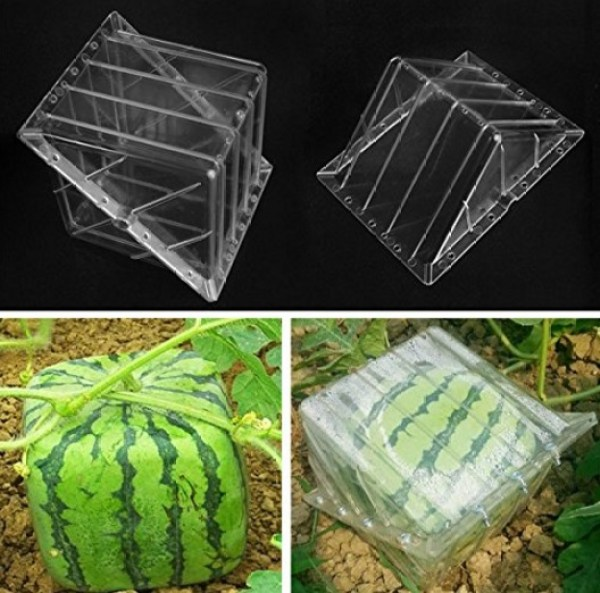 Square Shaped Watermelon Mould