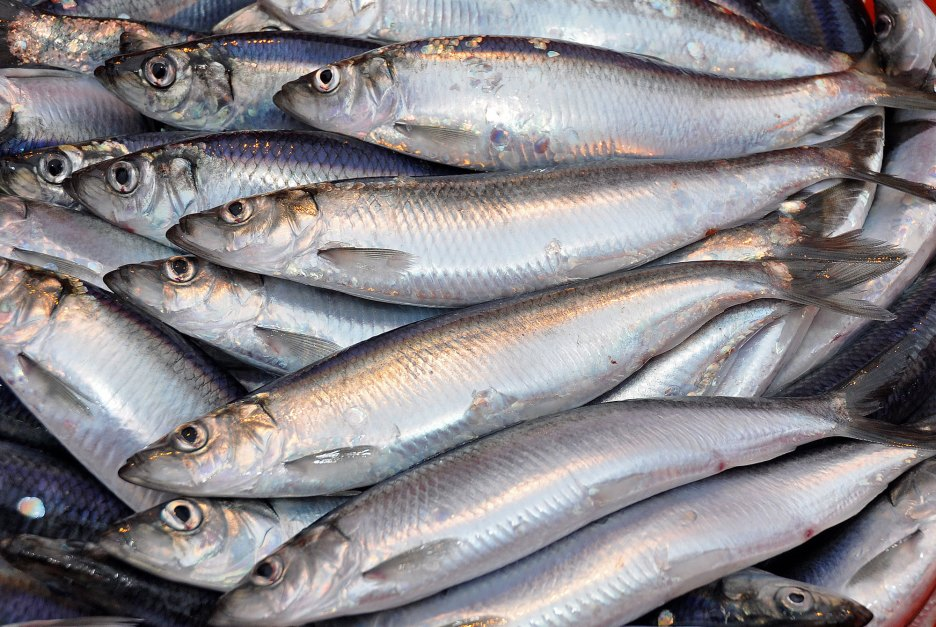 Ten Amazing Things You Can Make With Herring and All the Recipes