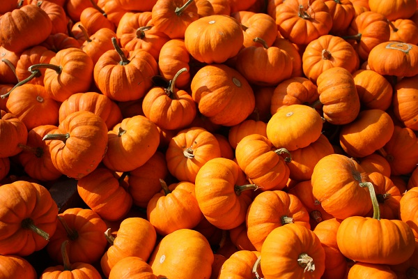 Did You Know Pumpkins Can Stimulate Hair Growth?