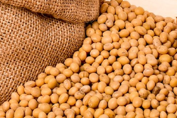 Did you Know Soybeans is Good For Your Nails?