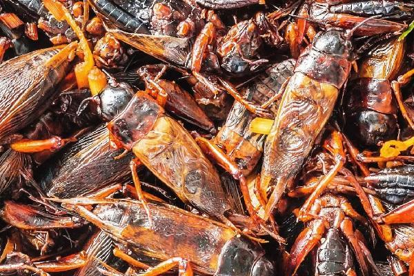 Fried Crickets