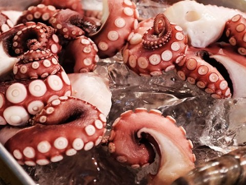 Ten Dangerous and Disgusting Foods That Are Astonishingly Expensive