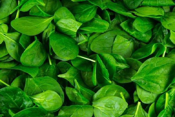 Spinach (4 mg – per 100 Grams)