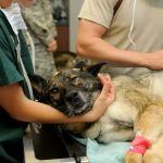 Vétérinaire Clinique Chien Patient Des Animaux - Droit d'auteur: Pixabay – License CC0
