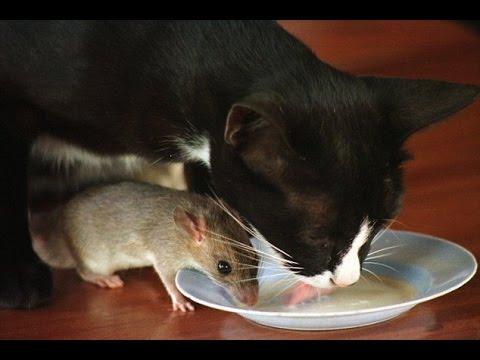 Jedna je mačka mnogo jela