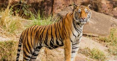 Ana Krolo: Najljepša životinja
