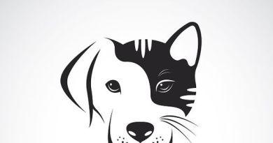 Filip Zadravec: Basna o psu i mačku