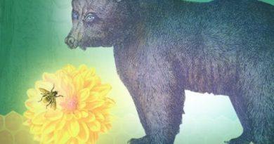 David Jovičić: Medvjed i pčela
