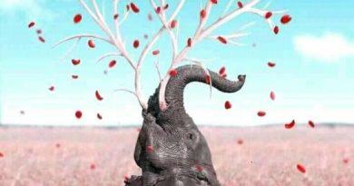 Matej Vidolin: Vuk i slon