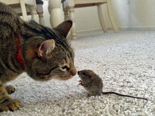 Noa Radanović: Mačka i miš