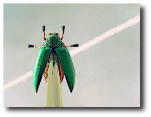 2. Escarabajo gigante