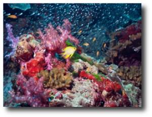 4. Arrecife del mar Andaman, India