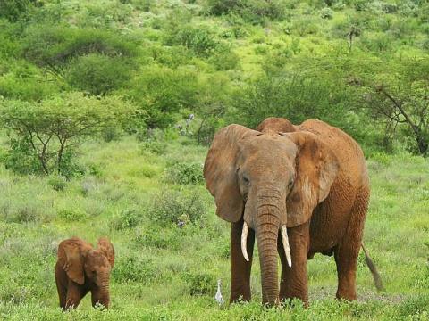 Mamá elefante