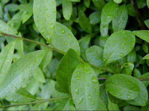 lluvia para regar tus plantas